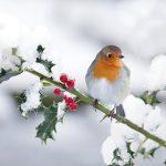 Gli uccellini hanno freddo, come noi. Aiutiamoli a superare l'inverno!