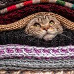 Gianni Rodari: il gatto inverno