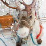Dieci idee regalo per chi ama le renne