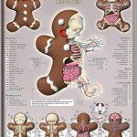 Anatomia di un omino di pan di zenzero