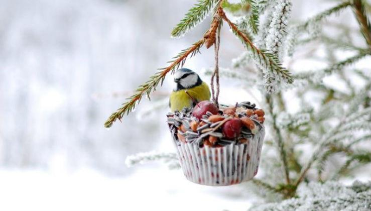 Cosa dare da mangiare agli uccellini di inverno
