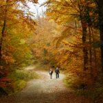 15 cose da fare ora che è autunno