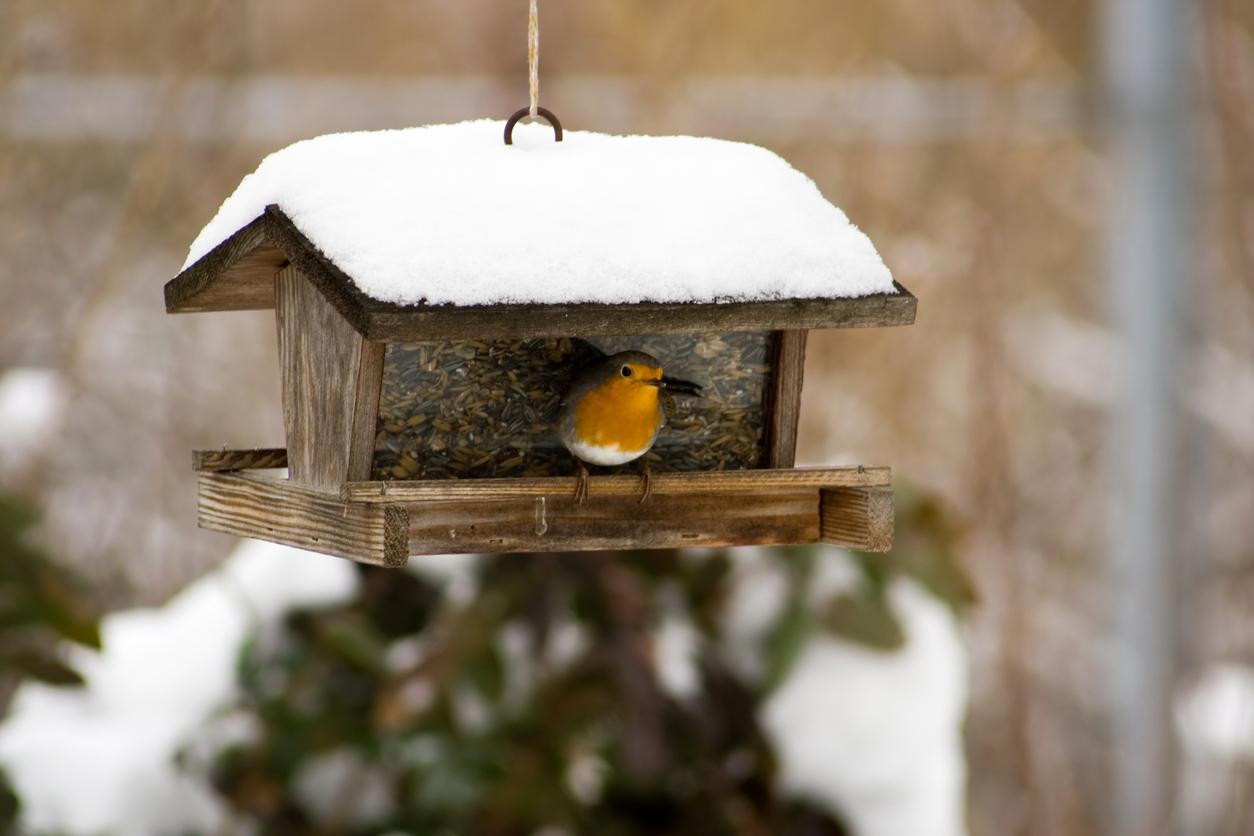 uccellini inverno cibo