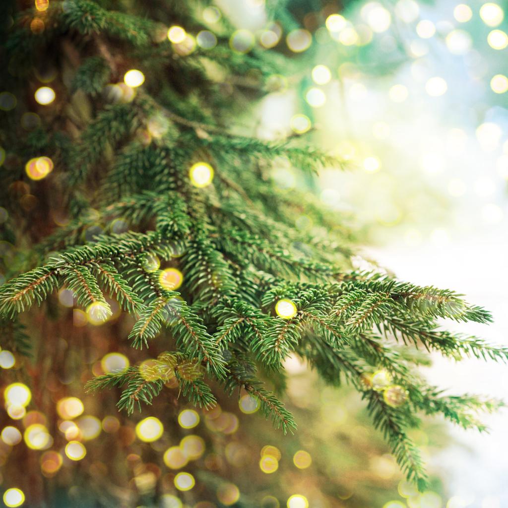 Perche l'albero di natale si fa 8 dicembre