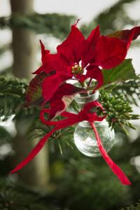 Immagini Di Fiori Di Natale.Immagini Di Fiori Di Natale Disegni Di Natale 2019