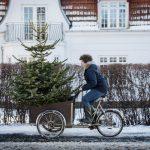 Albero di Natale: quando si fa e quando si toglie