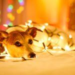 Le decorazioni da tenere anche ora che non è più Natale