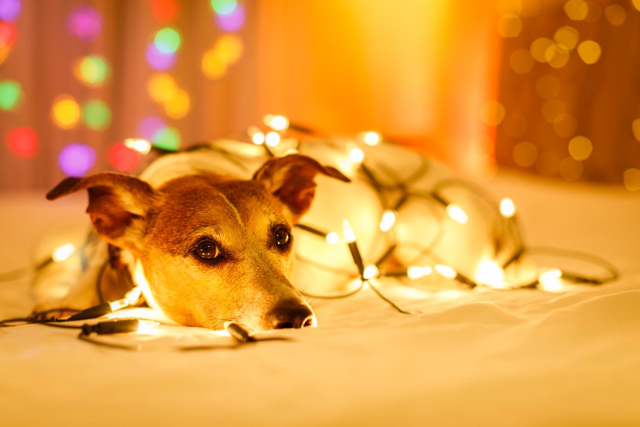 Lucine decorazioni di Natale