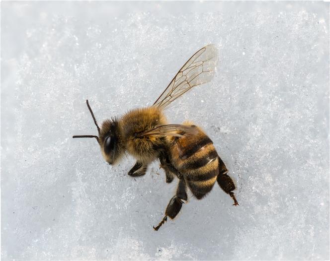 api inverno