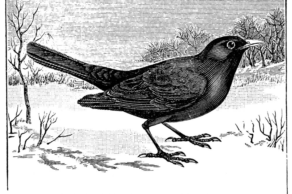 Giorni della Merla Antica illustrazione