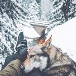 I lupi tra leggende, foto magnifiche e paure ancestrali