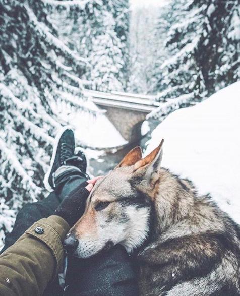 il lupo e il ragazzo