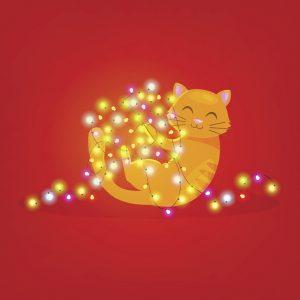 Il gattino che gioca con le luci