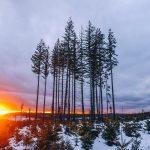 Concorso di scrittura gratis: E in lontananza l'inverno bisbigliò