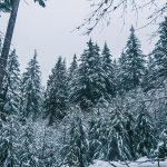"""Concorso di narrativa """"E in lontananza l'Inverno bisbigliò"""""""