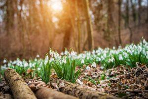 La primavera nei boschi
