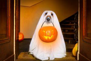 cane e zucca halloween