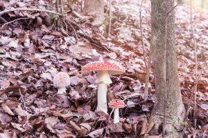 foto funghi nel bosco