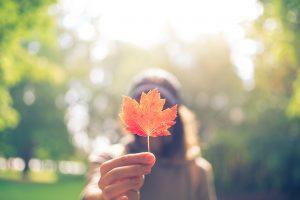 raccogliere foglie seccheraccogliere foglie secche