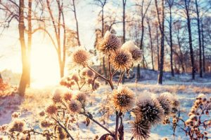 luce inverno
