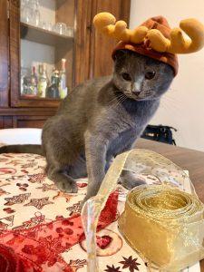 pacco regalo gattino