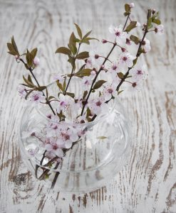 rametti di ciliegio